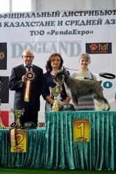 Хендлер в алматы(показ собак на выставке)