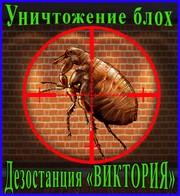 Дезостанция«ВИКТОРИЯ»,  уничтожение,  блох в Алматы и области.