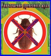 Дезостанция«ВИКТОРИЯ»,  уничтожение древесного жука (короеда). Алматы и область.
