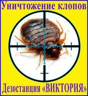 Дезостанция«ВИКТОРИЯ»,  уничтожение,  клопов в Алматы и области.