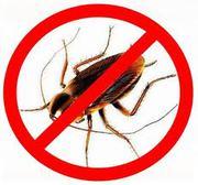уничтожение  крыс,  мышей,  тараканов,  клопов,  блох,  муравьев,  комаров.