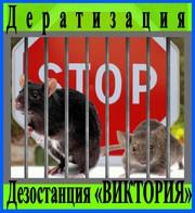 Дезостанция«ВИКТОРИЯ»,  дератизация (уничтожение грызунов). в Алматы.