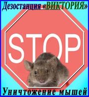 Дезостанция«ВИКТОРИЯ»,  уничтожение,  мышей в Алматы и области.