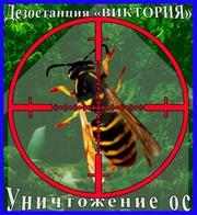 Дезостанция«ВИКТОРИЯ»,  уничтожение ос и осинных гнёзд в Алматы и обл