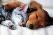 Передержка домашних животных