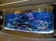 Рыбки,  аквариумы морские и пресноводные