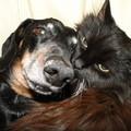 Ветеринарные услуги с выездом на дом,  круглосуточно.