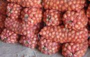 Овощи оптом ,  от 50 тонн .