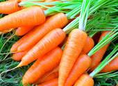 Морковь(Павлодар)