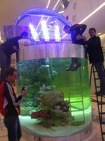 Чистка аквариума/разовое и абонентское обслуживание