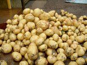 Продам картофель оптом от производителя
