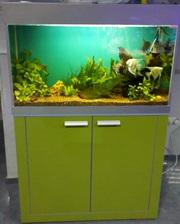 Мебель под аквариум морской и пресноводный в алматы