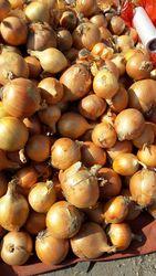Овощи оптом, поставка по всему Казахстану.