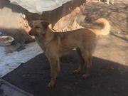 Надежный друг и охранник для дома и семьи в Алматы