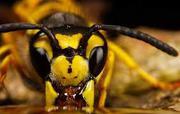 Продам пчёл