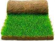 Рулонные газоны,  экспресс-озеленение
