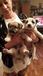 В поиске дома чудесные щенки.