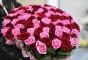 101 роза розовые и красные,  высота 50 см
