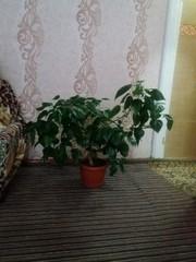 Пышное,  красивое растение
