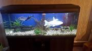 аквариум JEBO с рыбками и декарациями , действующий