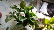 продам домашние цветы 87073430210