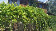 Уютный домик для летнего отдыха,  тенистый сад,  все для души