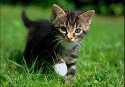 Отдаем в добрые и заботливые руки котенка.