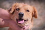 Собачка Люся из приюта