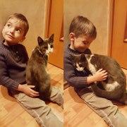 Котик ищет дом и семью.