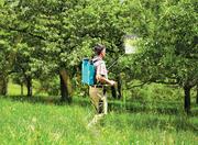Осеняя противогрибковая обработка плодовых деревьев в Алматы