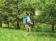 Осенняя противогрибковая обработка плодовых деревьев в Алматы