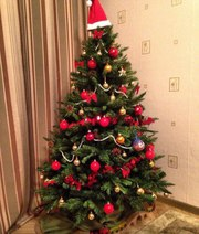 Купить ёлка Зын зын ёлкалар. Искусственный елка,  новогодний елка.