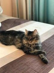 Очаровательная кошка Анечка ищет дом