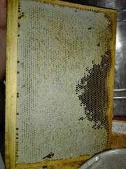 Мёд натуральный,  без добавок. Экологичный. Горный.Лечебный.