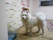 Гостиница для собак (зоогостиница,  передержка) happydogs.kz